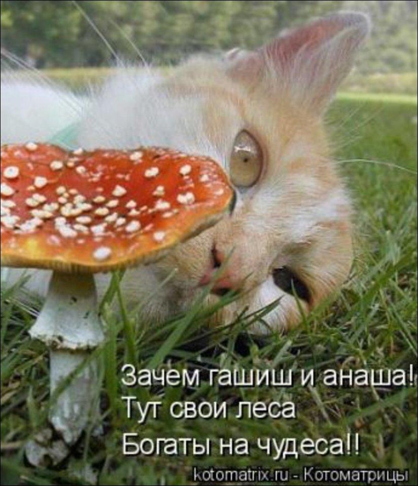 Andy Grigoriev's HomePage - Веселые кошки.