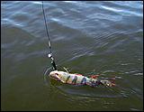 рыбалка на песчаном в алтайском крае