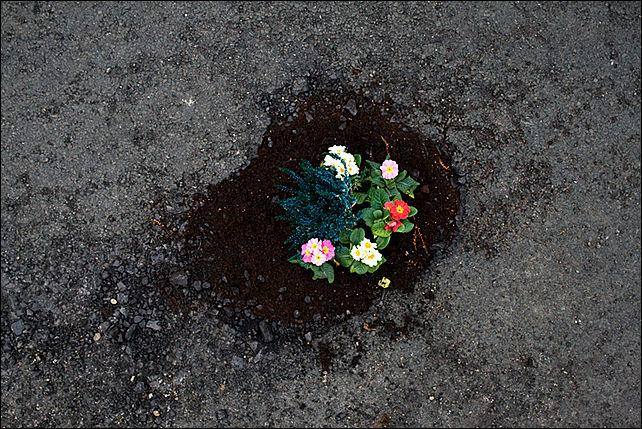 Цветов рязань, купить цветы на асфальте