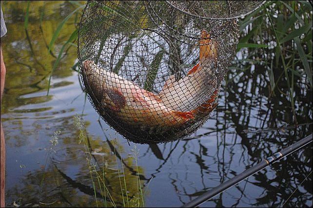 платной рыбалке нет рф