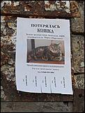 В барнауле потерялась кошка по кличке