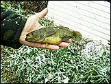 ...обсуждали фото неизвестной рыбы, сообщалось, что вес рыбины - 16...