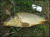 Фото с рыбалки 11 - Биоклассники.РУ - мир домашних животных.