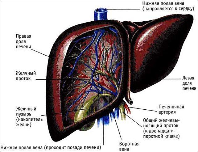 Порнуха с артерией #9