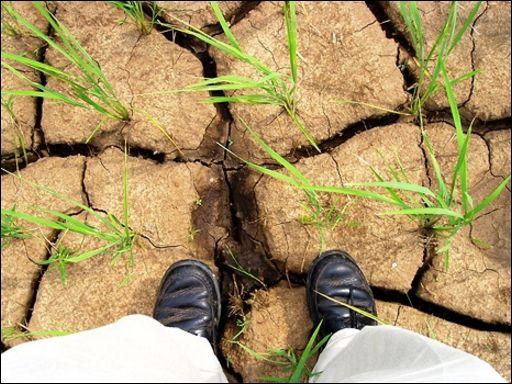 продовольствие, пшеница, гречка, общество, засуха