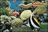 Аквариумные рыбки 103 шт.