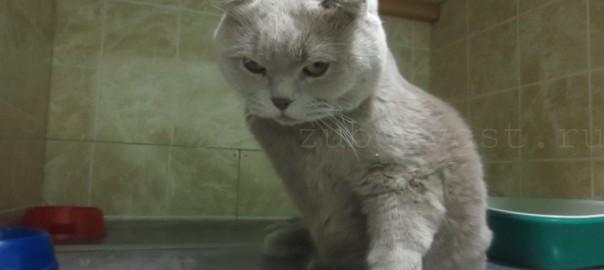 У кота мкб усыплять