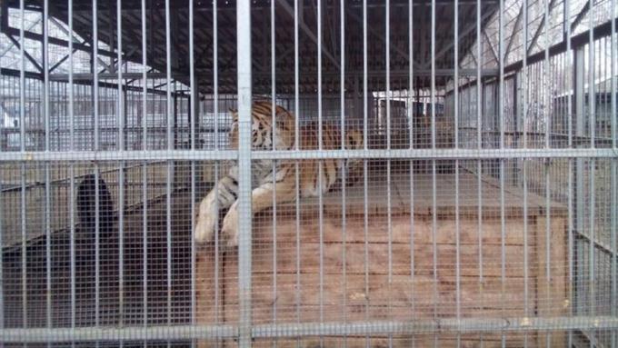 Алтайский зоопарк повесит знаки «Селфи грозит вашей жизни»
