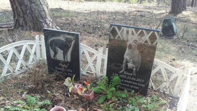 Как похоронить кота отзывы