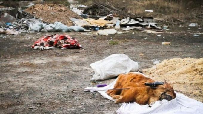 Генпрокуратура проверила сведения освалке домашних питомцев вБарнауле