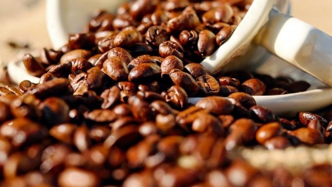 Вближайшем времени население Земли останется без кофе