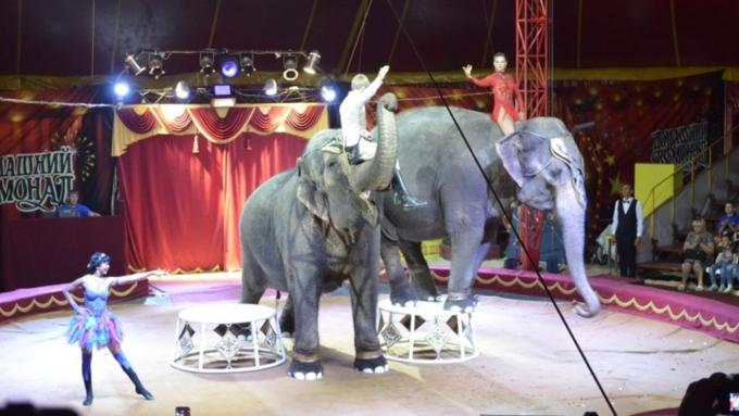 ВБарнауле ребенок получил травму вцирке слонов