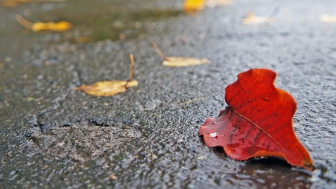 Дождь ижару до +28 градусов передали вАлтайском крае навторник
