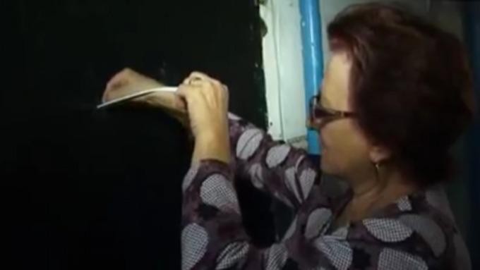 Барнаульцы две недели пробуют спасти запертого вквартире котенка