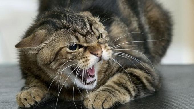 Вдетском лагере Бийска кот безумно покусал ребенка