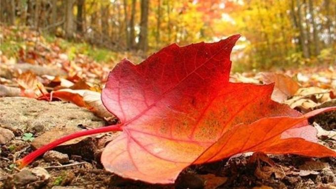 Последние дни сентября вАлтайском крае будут солнечными