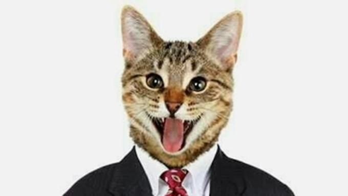 Кот вкостюме лишил индийца доступа к фейсбук