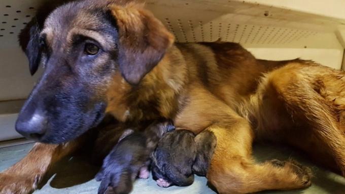 Столичное метро ищет хозяев для родившихся ввагоне щенят