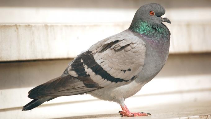 птицы элеватор
