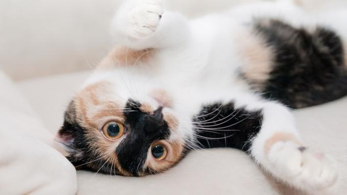 Состоялась премьера первого вмире музыкального альбома для котов
