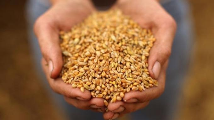 Аграрии Татарстана впервый раз планируют собрать 2,3 млн тонн сладкой свеклы