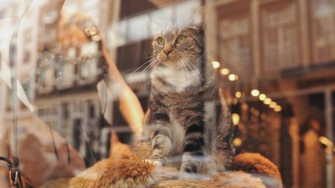 Веб-проект Alibaba открыл необычную вакансию: магазину требуется менеджер-кот