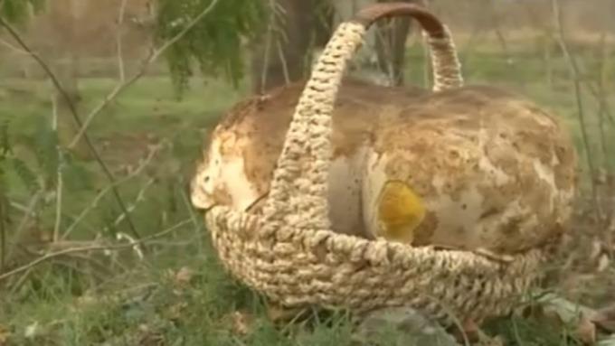Житель Краснодара нашел гриб, который недавал себя фотографировать