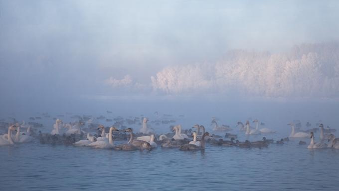 «Алтайская зимовка» пройдет с17 по18декабря вкрае