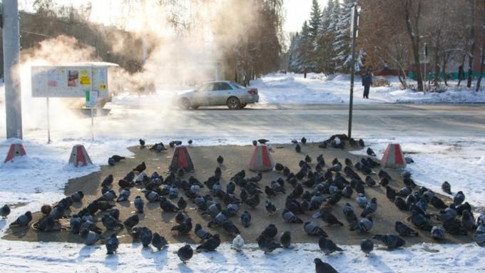 Метели, сильные снегопады иштормовой ветер ожидаются вконце рабочей недели вАлтайском крае