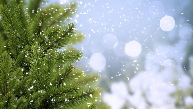 Втюменском селе чиновники спилили новогоднюю елку впалисаднике устарушки