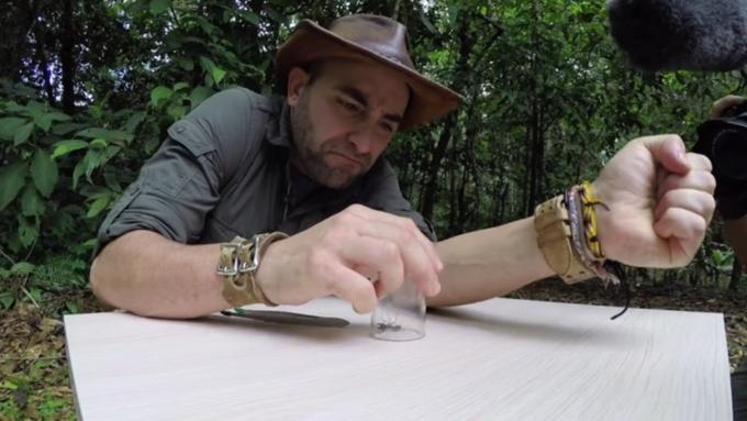 Вweb-сети опубликовали видео последствия самого больного укуса насекомого