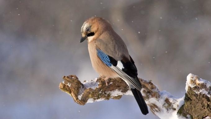 Снег, метель иветер ожидаются вовторник вАлтайском крае