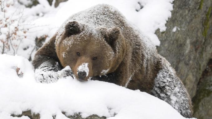 МВД: Личности подозреваемых в страшной расправе над медведем вЯкутии установлены