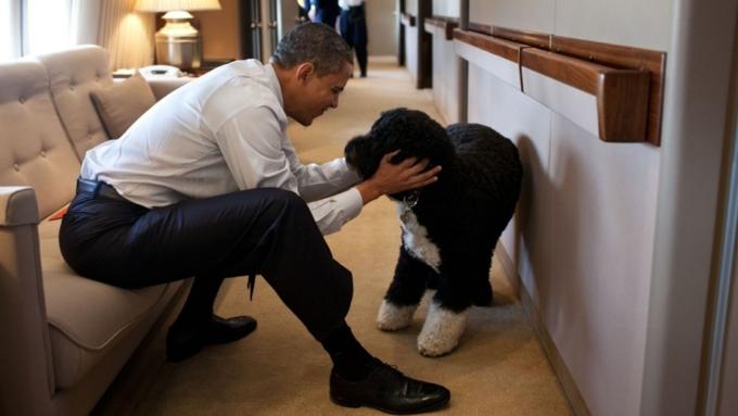Собачка Обамы покусала девушку, пришедшую вгости вБелый дом
