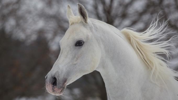 Лошадь спровоцировала ДТП вГорном Алтае