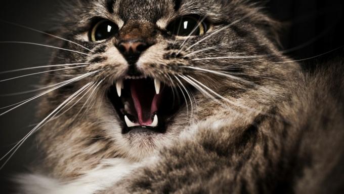Слепой котёнок держал встрахе граждан Кисловодска
