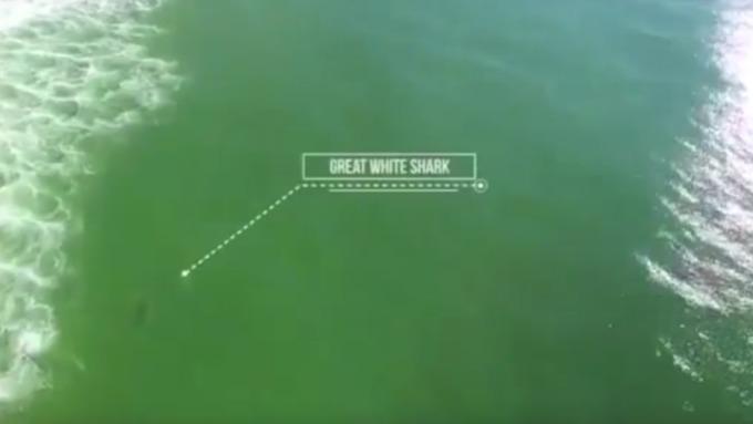 Дрон снял попытку нападения акулы насерфера вАвстралии