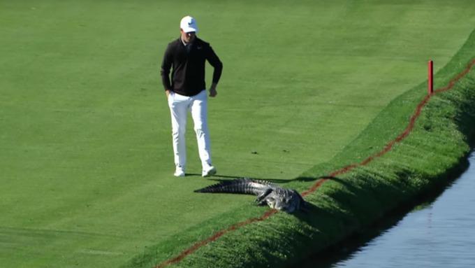Игрок вгольф прогнал крокодила споля