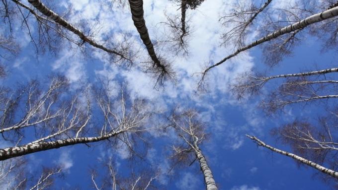 28марта вАлтайском крае ивБарнауле будет до +7°C