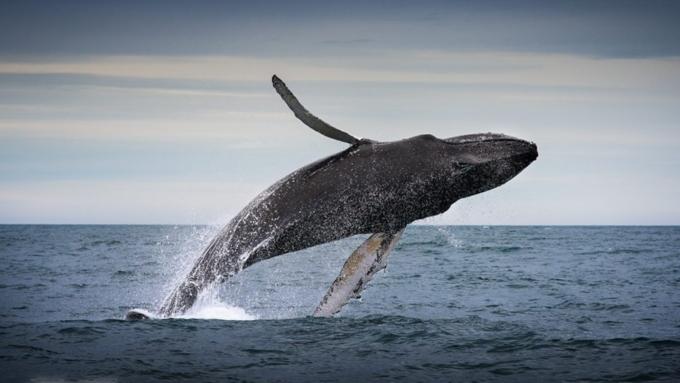 Видео: Ученые показали Антарктику глазами кита