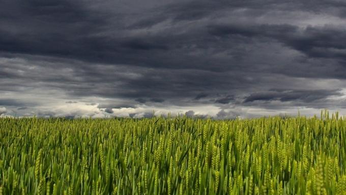 Жарит по-летнему: опогоде вАлтайском крае 13мая