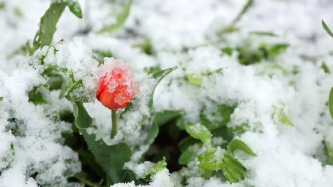 Сильное похолодание, заморозки имокрый снег ожидают Алтайский край