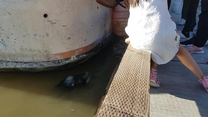 Вweb-сети появилось видео нападения морского льва надевочку