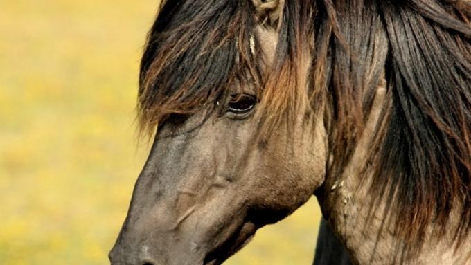 Впожаре под Петербургом погибли 26 лошадей