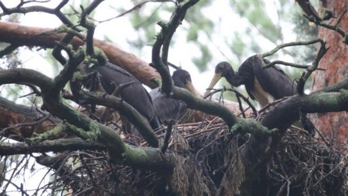 ВАлтайском крае обнаружили гнездо очень уникальных птиц