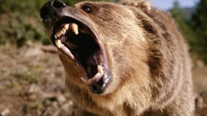 Медведь растерзал охотника наСахалине