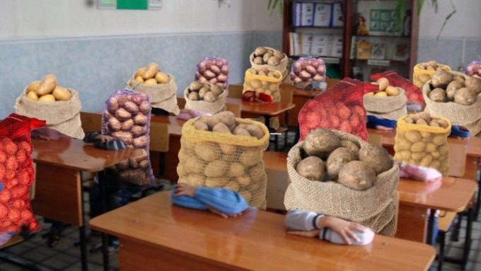 ВТатарстане начальник школы уволился после так называемого «картофельного скандала»
