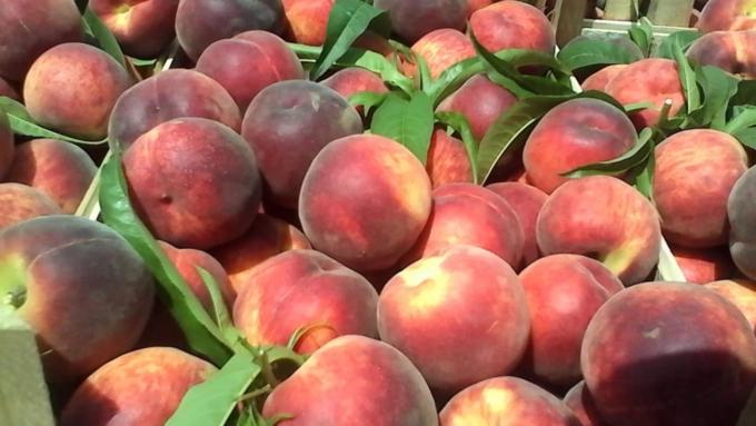 Россельхознадзор может ограничить ввоз фруктов изСербии