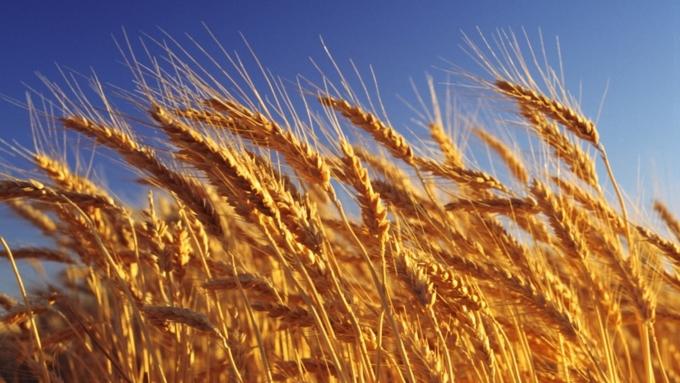 В РФ намолочено 1,7 млн тонн сои— Минсельхоз