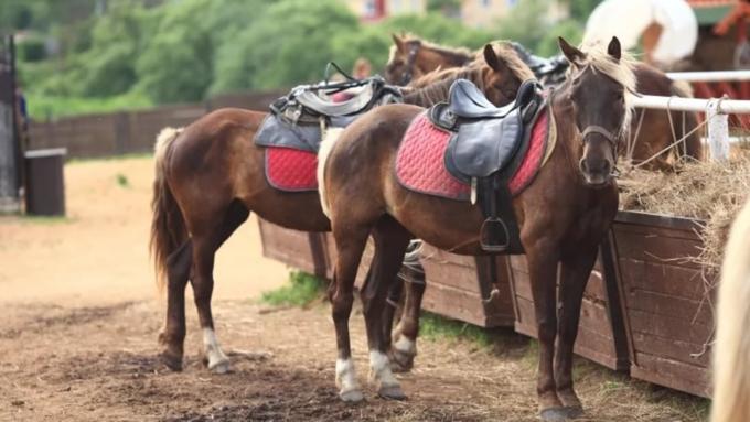 Под суд пошел организатор смертельной конной прогулки наАлтае